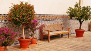 Gartenpflanzen als Sonnenschutz